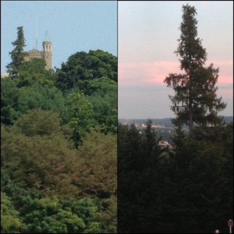 Hawk's Tree Both Sides